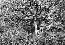 Kumpų kryžius
